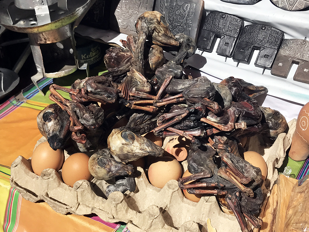 Llama fetuses at the Witches' Market